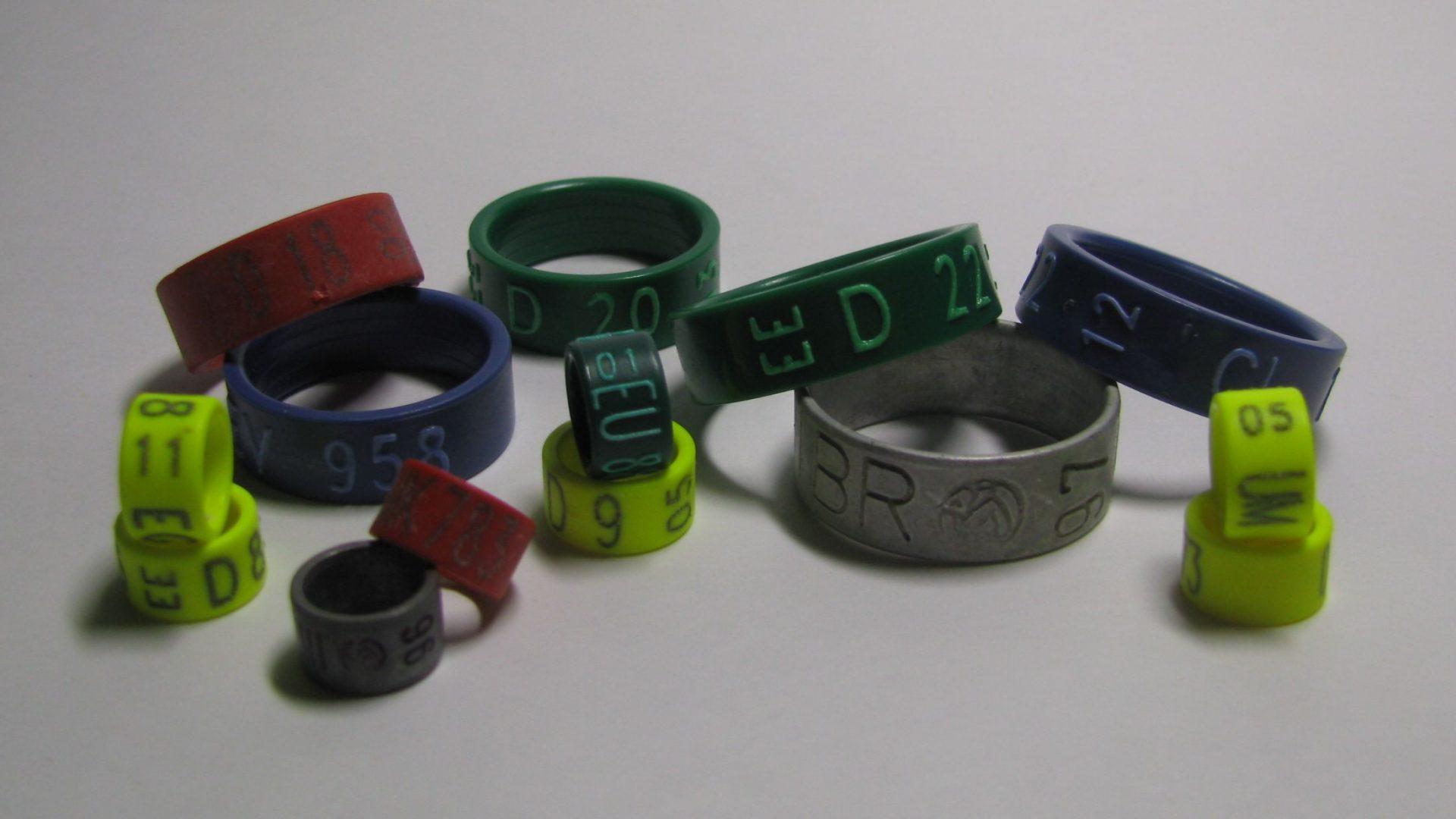 Die Ringe sind da!!!